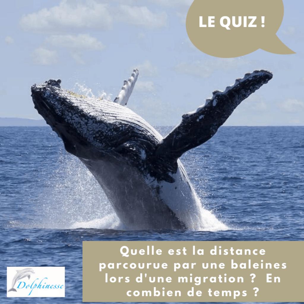 quizz baleines