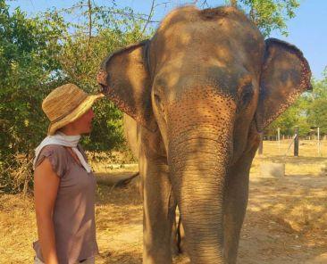éléphants Thaïlande voyage