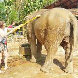 écovolontariat éléphants Thaïlande
