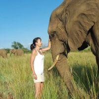 Rencontre avec un éléphant d'Afrique