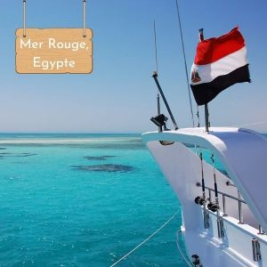 Nager avec les dauphins en Egypte