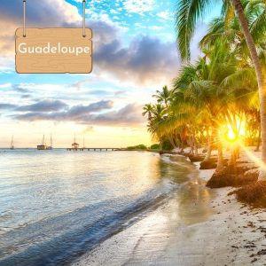 Nager avec les dauphins en Guadeloupe