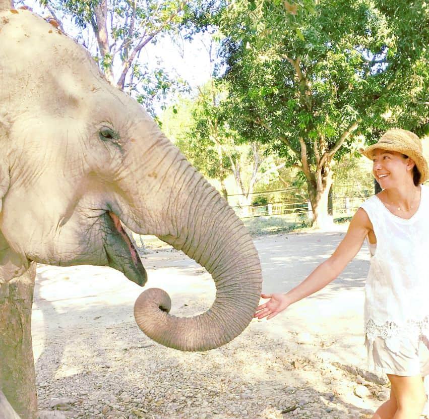 RENCONTRE ELEPHANT Thaïlande