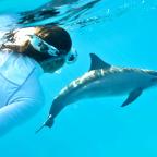 nager avec les dauphins en Mer Rouge