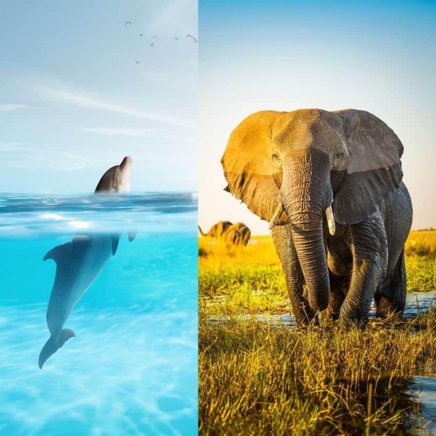 Dauphins et éléphants