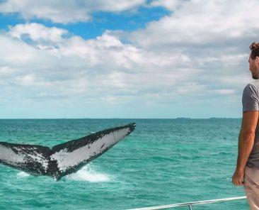 baleines Açores