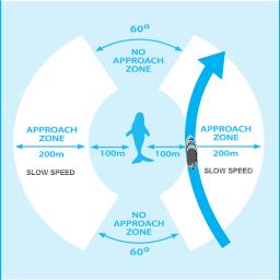 charte d'approche des baleines