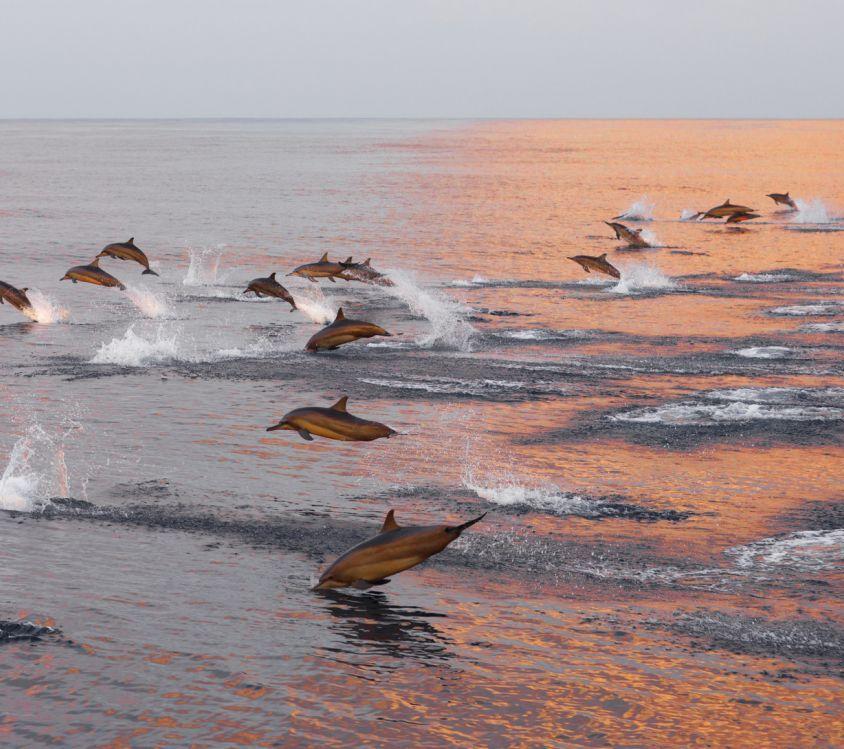 Escapade ranch & dauphins en France