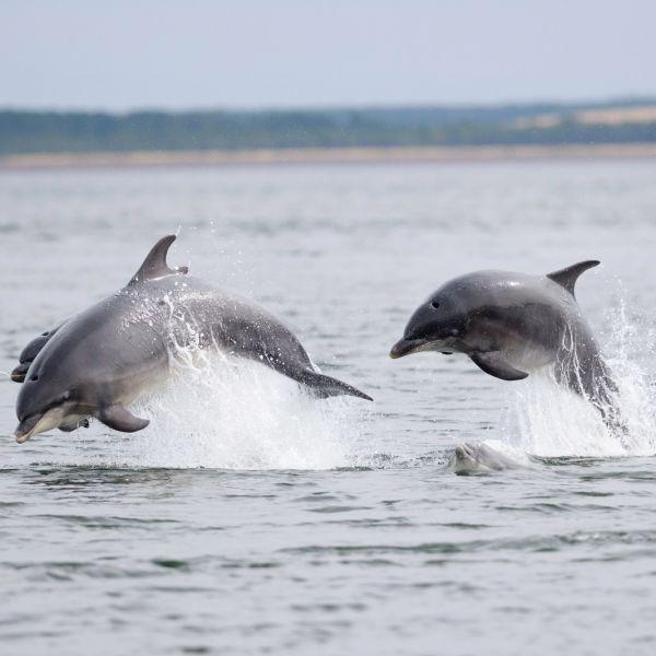 Wee-end dauphins en Bretagne