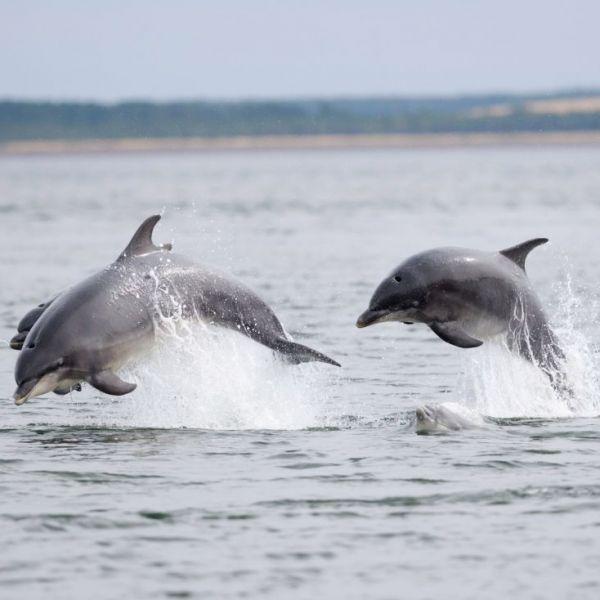 Week-end dauphins en Bretagne
