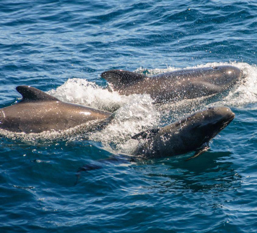 Escapade dauphins en France en famille