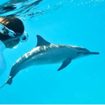 Nager avec les dauphins sauvages aux Bahamas