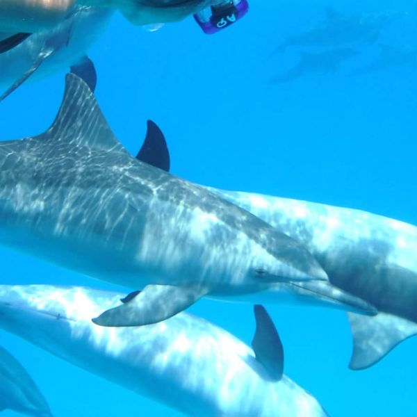 nager avec les dauphins sauvages