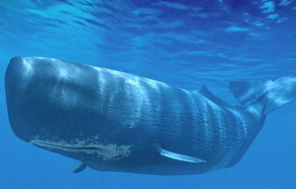 Dauphins, baleines, cachalots et volcans aux Açores