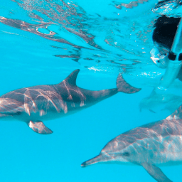 nage avec les dauphins aux Bahamas séjour écoresponsable
