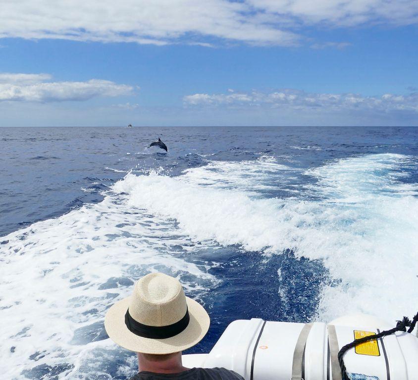 Escapade bien-être & dauphins sauvages en Bretagne