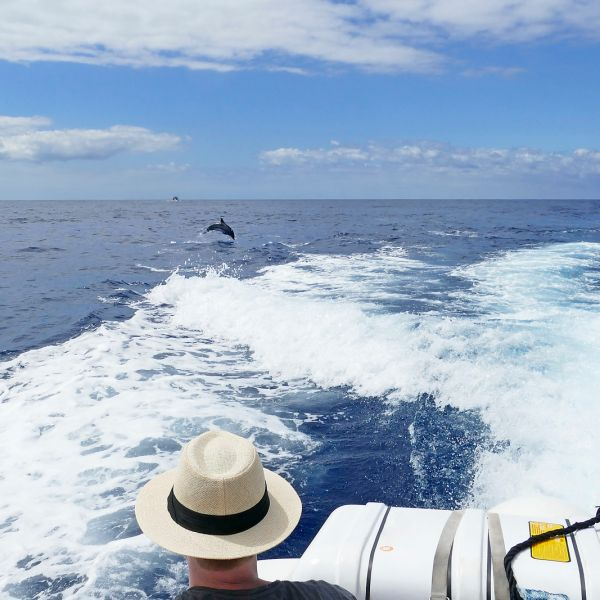Man with a white hat watching dolphins