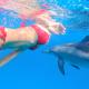 nager avec les dauphins en Mer Rouge 10