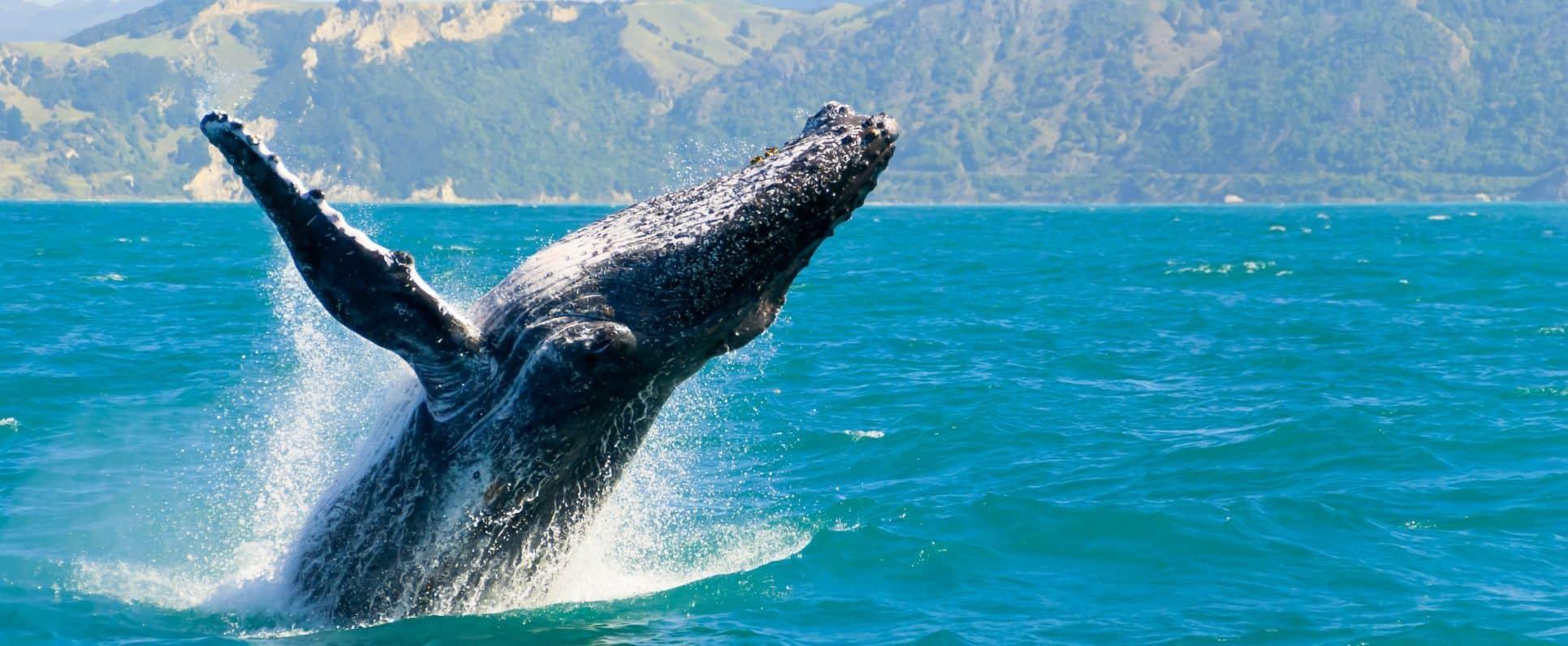voyage animalier ecoresponsable dolphinesse