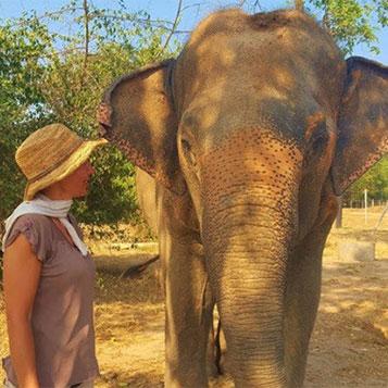 Voyage à la rencontre des éléphants en Thaïlande