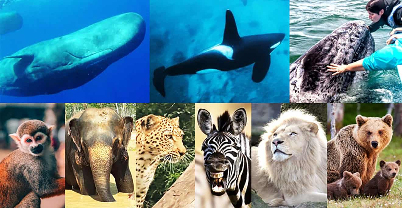 voyage animaux écoresponsable