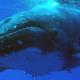 nager avec les baleines voyage écoresponsable avec une spécialisteagé