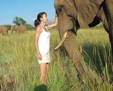 rencontre elephant dolphinesse