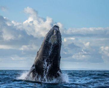 Voyage nager avec les baleines