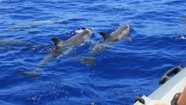 voir dauphins en bateau en Bretagne