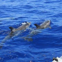 voir dauphins du bateau en Bretagne