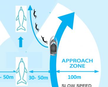 approche dauphins à la nage carre