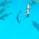 nager avec les dauphins Approche Ecoresponsable