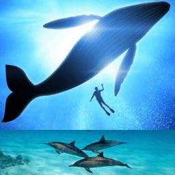 nager avec les baleines et dauphins voyage écoresponsable