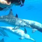 nager avec les dauphins et les baleines à Moreea