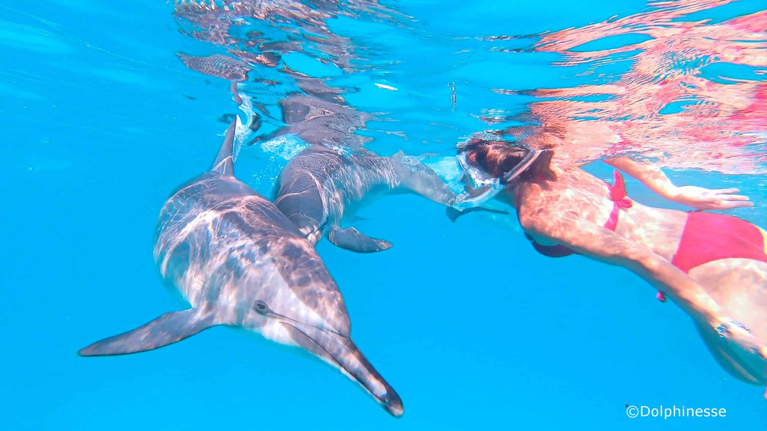 nager avec les dauphins approche respectueuse
