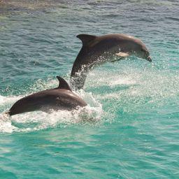 nager avec les dauphins au Mexique