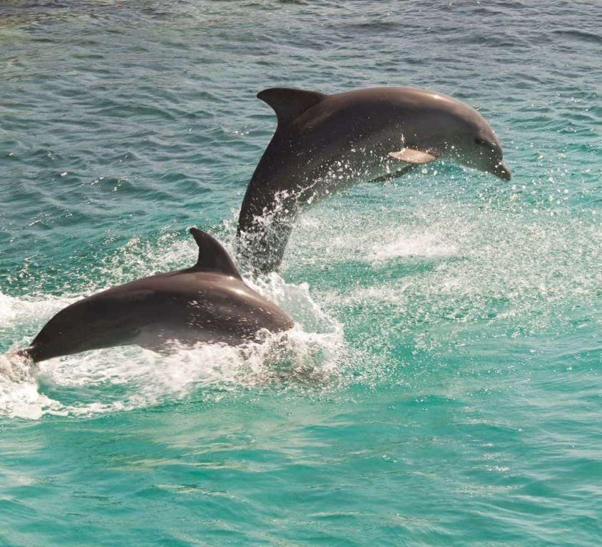 Dauphins, baleines, cachalots et volcans aux Açores – Spécial famille