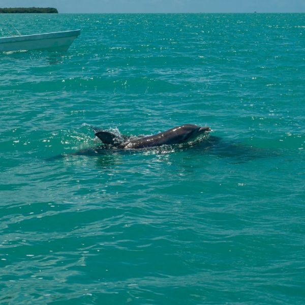 nager dauphins Mexique (9)